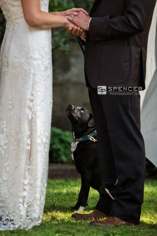 wedding ceremony with dog