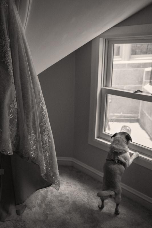 dog at wedding ceremony at ballroom at park lane