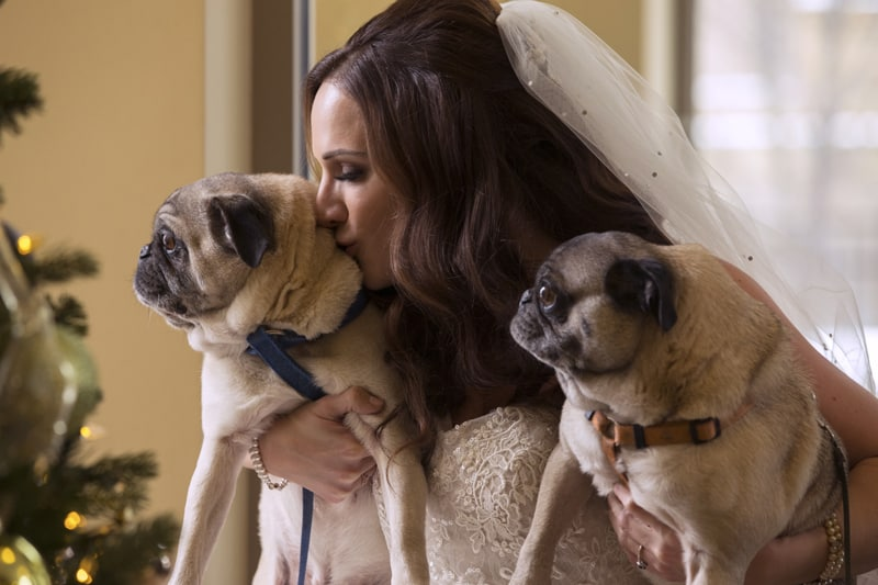 bride with her dogs on her wedding day a ballroom at park lane
