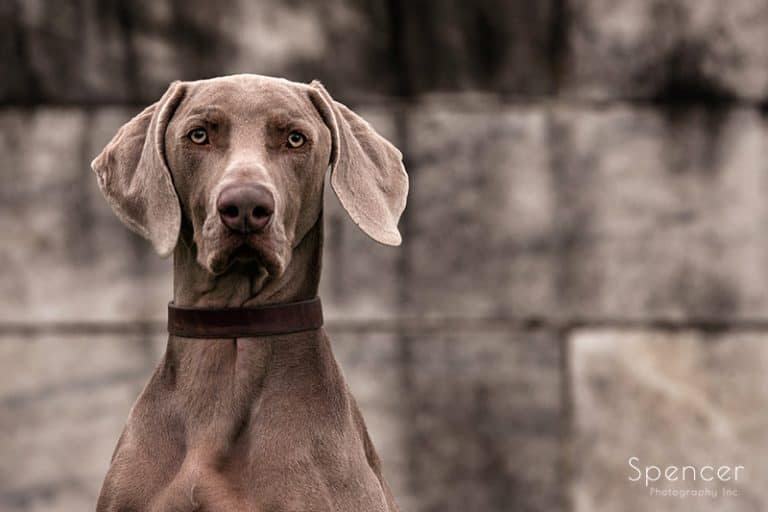 Your Pets Are Family Too. Family Pictures with Pets  // Cleveland Photographers