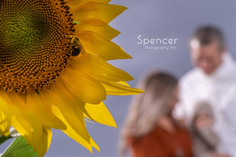 Family Pictures in Sunflower Fields // Cleveland Photographers