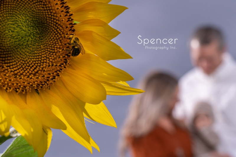 bee interrupting family picture in sunflower field
