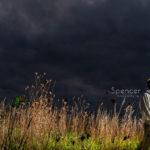 Senior Pictures in Garrettsville  // Cleveland Senior Photographer